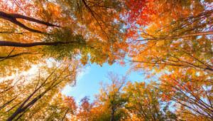 Prognoza pogody: Ciepły koniec września