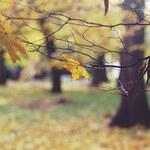 Prognoza pogody: Kiedy nadejdzie ochłodzenie?