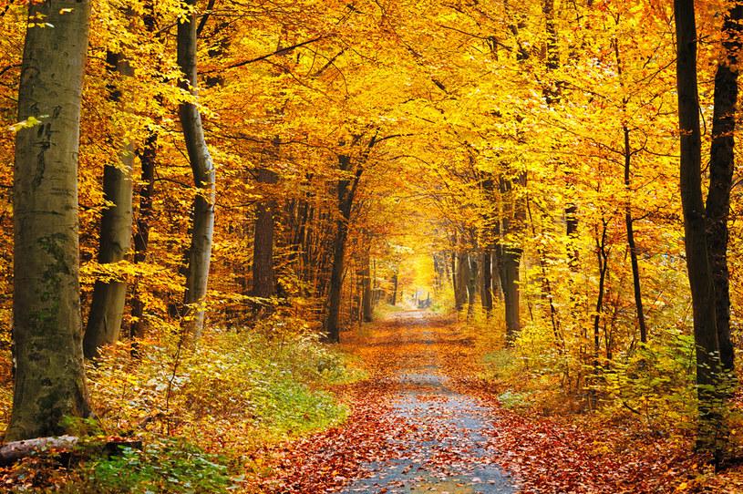 Prognoza pogody. W weekend czeka nas prawdziwa polska jesień /123RF/PICSEL