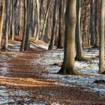 Prognoza: Zimny początek tygodnia. Może pojawić się śnieg
