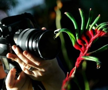 Programy kreatywne w aparacie