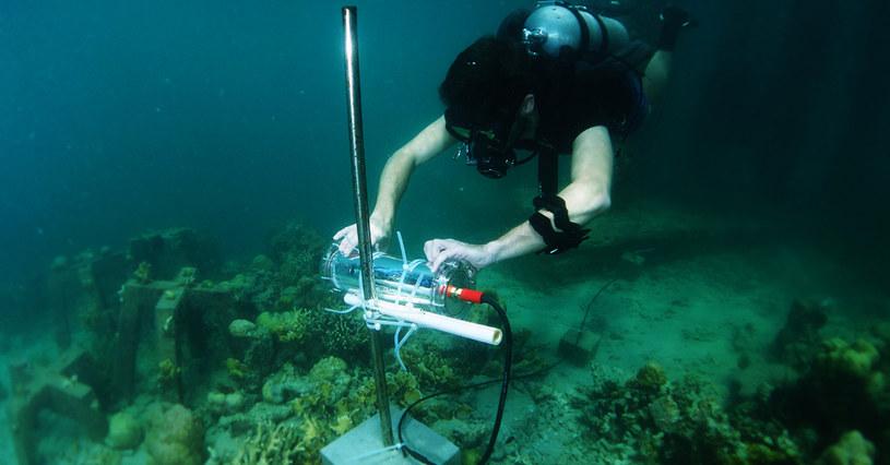 Projekt CORaiL może pomóc ocalić rafy koralowe /materiały prasowe