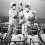 Promieniowanie wpływa na płeć