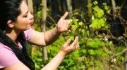 Proste sposoby na najczęstsze dolegliwości roślin