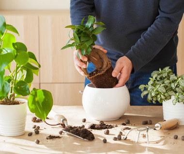 Proste triki, by rośliny doniczkowe zawsze wyglądały pięknie