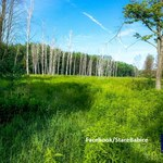 Protest w Lesie Bemowskim. Deweloper chce zbudować osiedle w otulinie rezerwatu