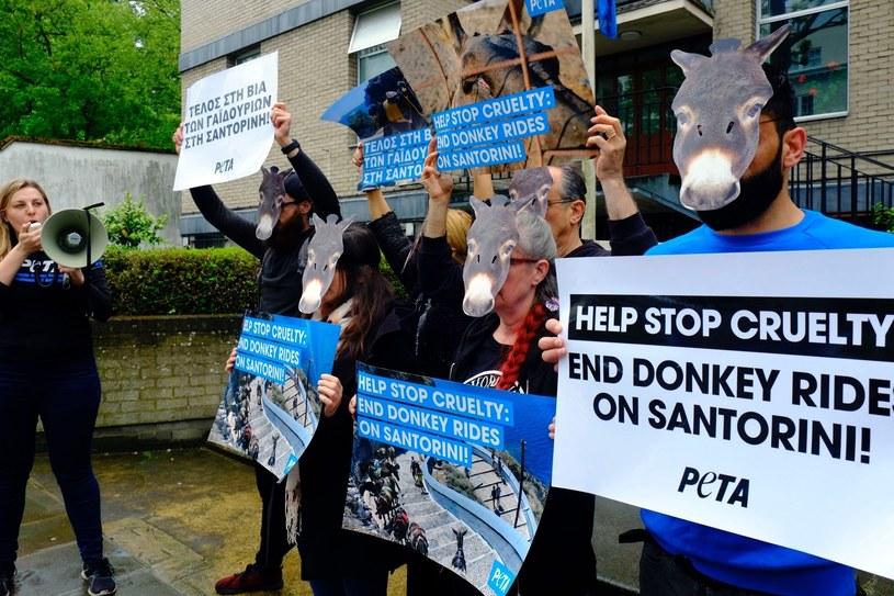 Protest w sprawie traktowania osłów na Santorini, zorganizowany przed ambasadą Grecji w  Londynie. /BACKGRID