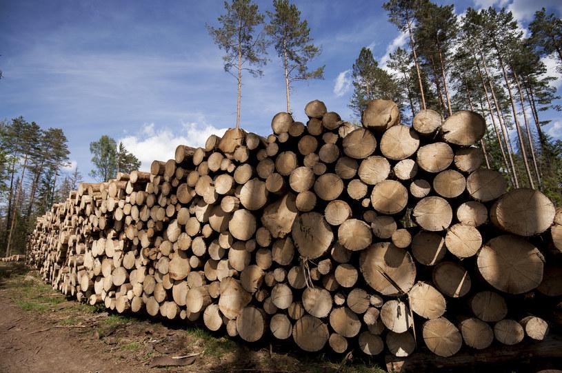 Protestujący chcą opinii specjalistów od wycinki drzew /Michał Kość /Agencja FORUM
