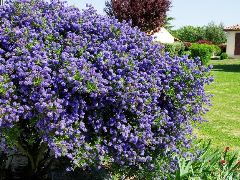 Prusznik obsypany kwiatami /©123RF/PICSEL