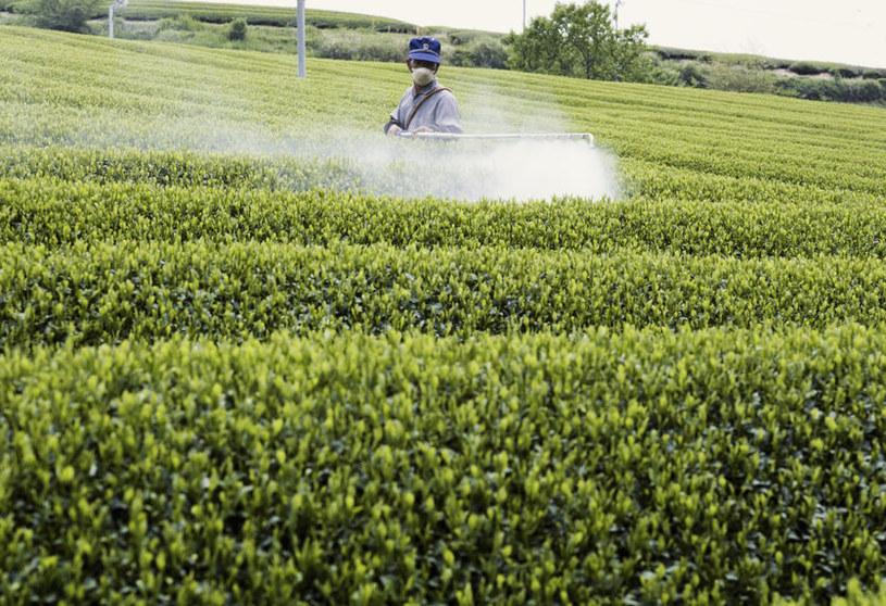 Pryskanie plantacji herbaty /©123RF/PICSEL