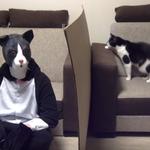 Przebrał się za swojego kota. Co na to pupil?