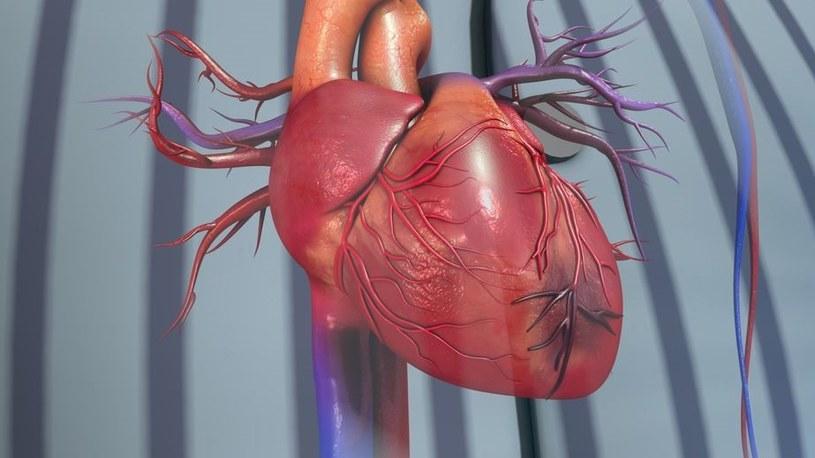 Przeciwutleniacze wspierają pracę serca /123RF/PICSEL