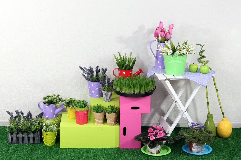 Przeczytaj, zanim wybierzesz kwiaty do swojego mieszkania /123RF/PICSEL