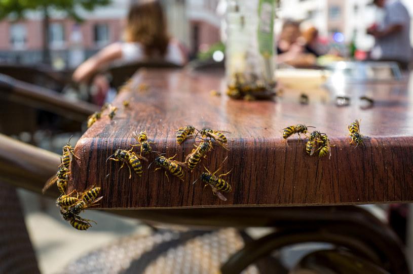 Przed sezonem wybudzania się owadów z zimowego snu warto przypomnieć sobie zasady postępowania w razie ukąszenia! /123RF/PICSEL