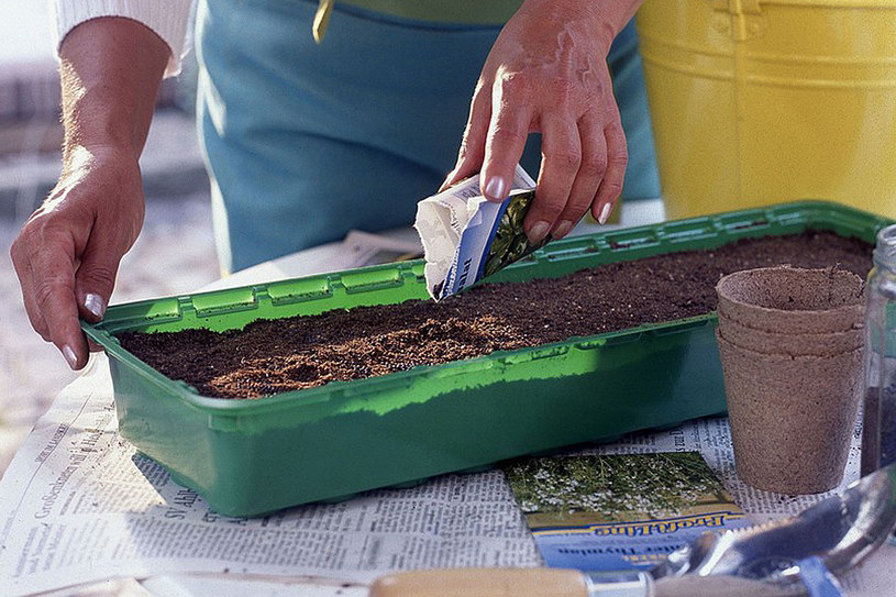 Przed wysianiem nasion do doniczek torfowych lub wielodoniczek, skrzyneczek lub kuwet, zabezpieczmy je przed chorobami, pleśnią /East News
