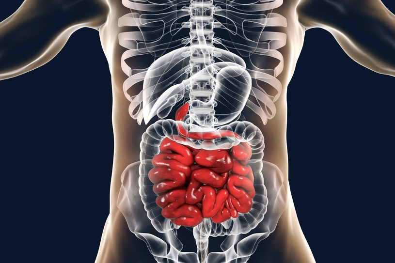 Przedawkowanie błonnika może poważnie zaszkodzić jelitom /123RF/PICSEL