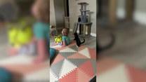 Przedziwny koci taniec. Chce zwrócić na siebie uwagę