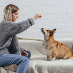 Przekąski dla psa, które zrobisz w domu