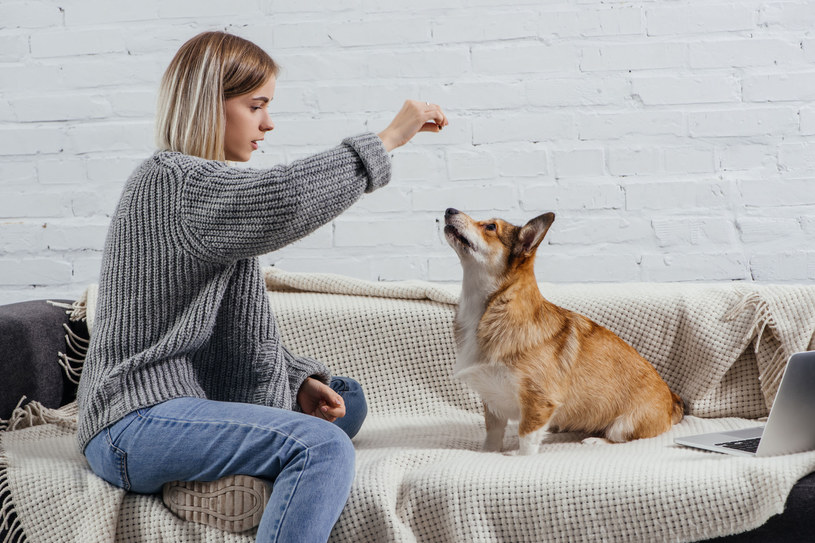 Przekąski sprawdzają się świetnie w trakcie tresury psa /123RF/PICSEL
