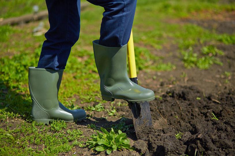 Przekopywanie ogrodu /©123RF/PICSEL