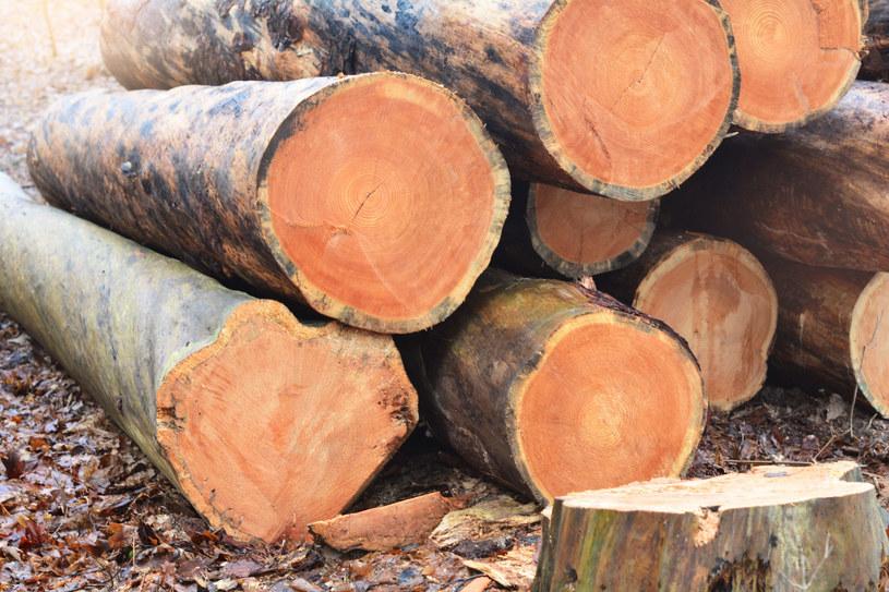 Przemyt drewna zasila szarą strefę /123RF/PICSEL