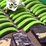 Przemytnicy ukryli kokainę... w sztucznych bananach