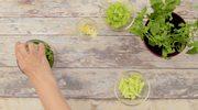 Przepis na zielony napój odchudzający