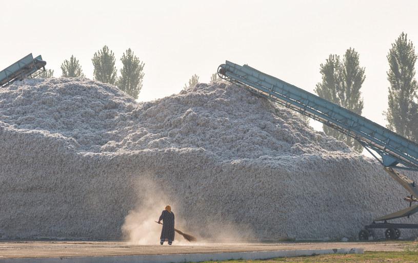 Przerób bawełny w Uzbekistanie. Zdj. ilustracyjne /123RF/PICSEL