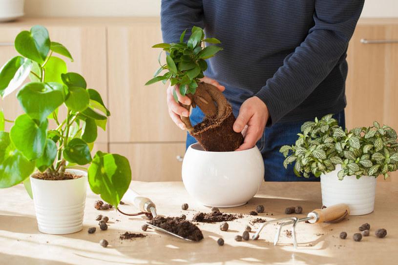 Przesadzanie roślin /©123RF/PICSEL