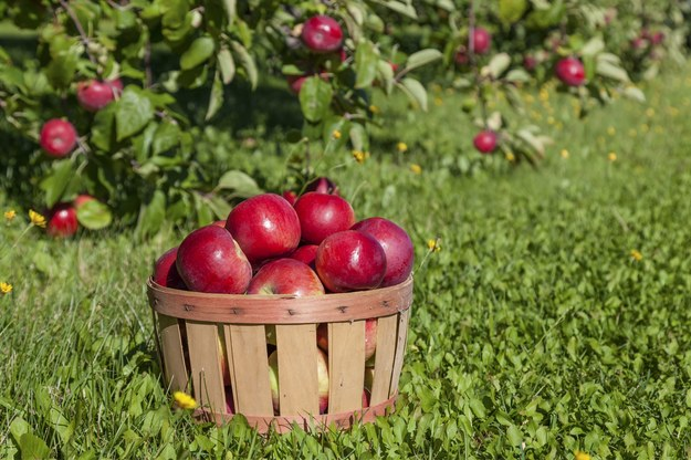 Przetwórstwo owocowo-warzywne szuka pracowników /123RF/PICSEL