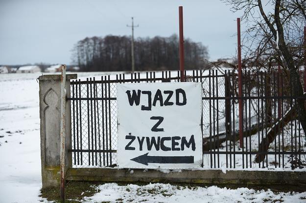 Przez chytrość traci cale polskie rolnictwo... /PAP