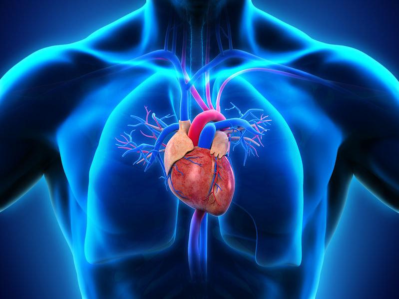 Przez długi czas nie było wiadome, do czego służą te struktury we wnętrzu serca /123RF/PICSEL