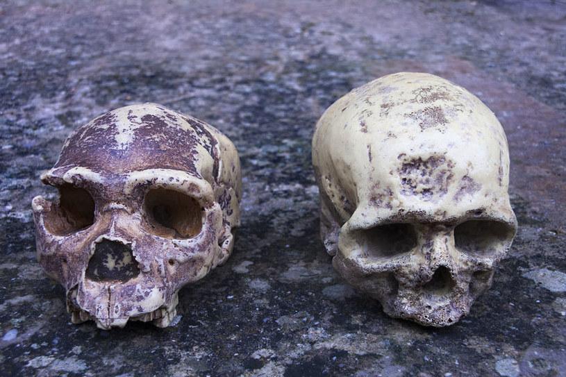 Przodkowie ludzi współczesnych mogli hibernować, ale czy tak faktycznie było? /123RF/PICSEL