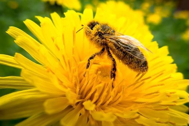Przy resorcie rolnictwa powstanie zespół ds. pszczelarstwa /©123RF/PICSEL
