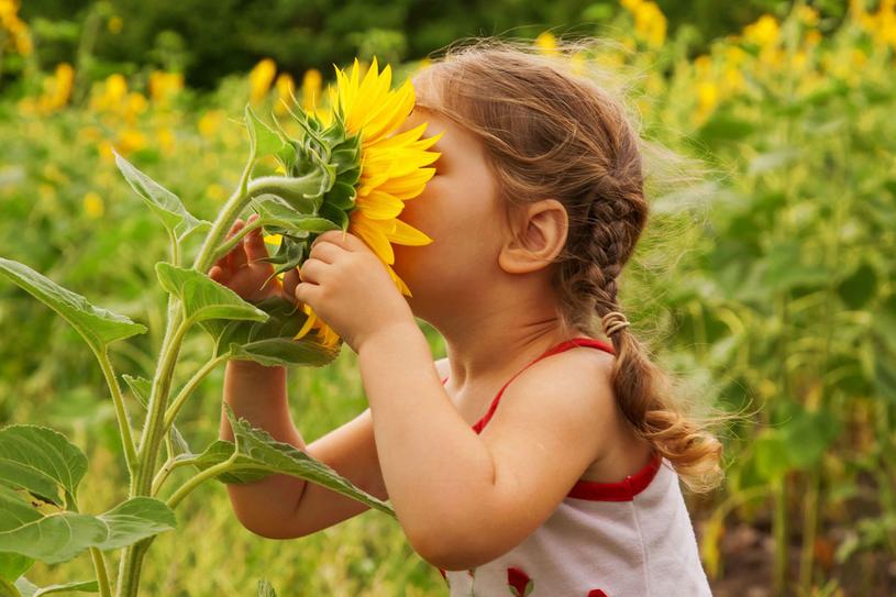 Przy stanach gorączkowych napar ze słonecznika pomaga dzieciom /Picsel /123RF/PICSEL