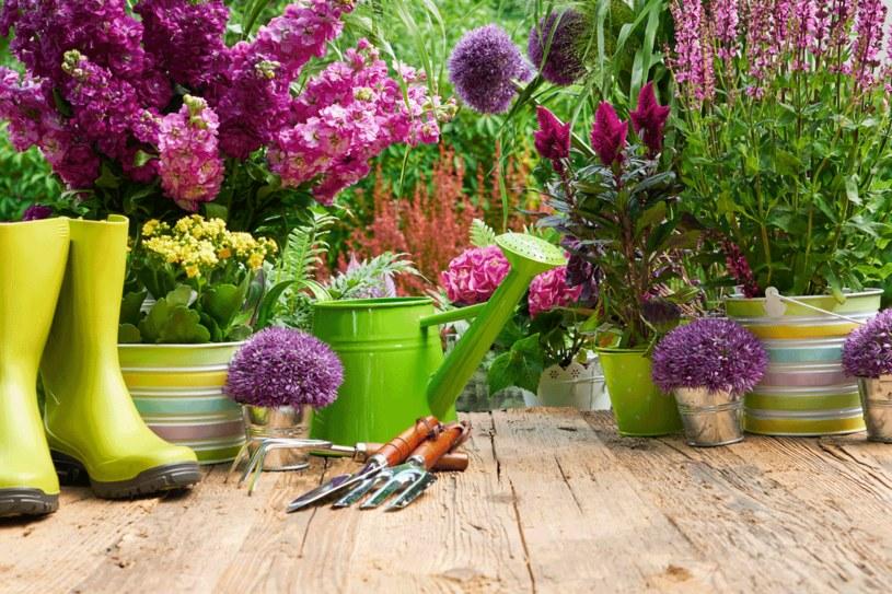 Przycinaj rośliny w domu i ogrodzie /123RF/PICSEL