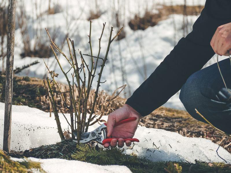Przycinanie roślin pobudzi je do intensywniejszego wzrostu /123RF/PICSEL