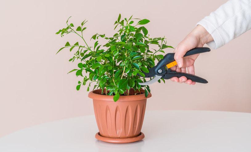 Przycinanie roślin /©123RF/PICSEL