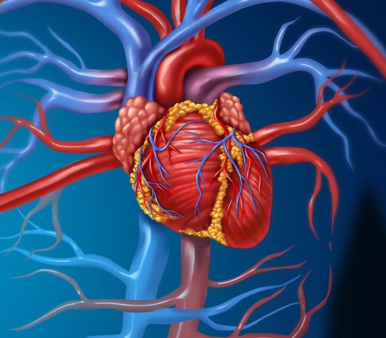 Przyczyny niewydolności serca /©123RF/PICSEL