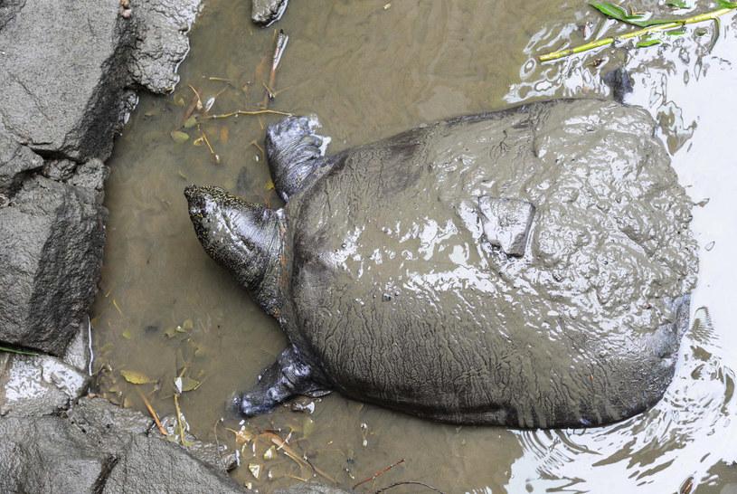 Przyczyny śmierci zwierzęcia mają wyjaśnić władze Suzhou i zagraniczni eksperci /STR / AFP /AFP