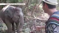 Przyjazne słoniątko tańczy z turystą