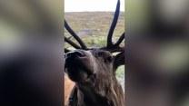 Przyjazne spotkanie z jeleniem