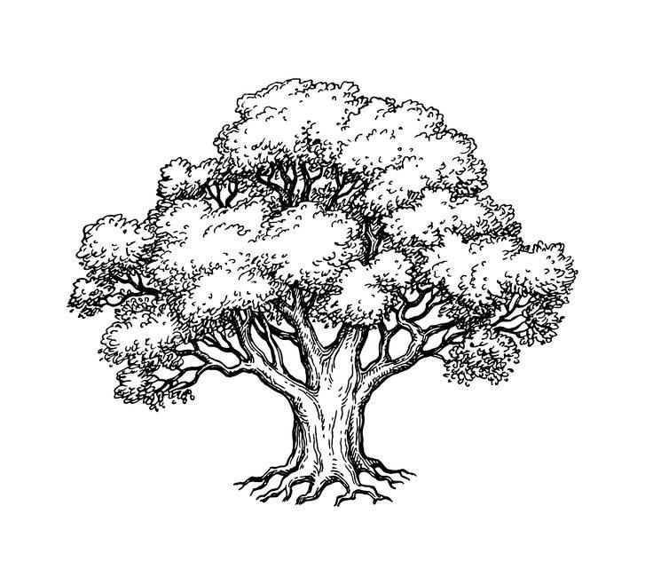 Przykładowe drzewo /©123RF/PICSEL