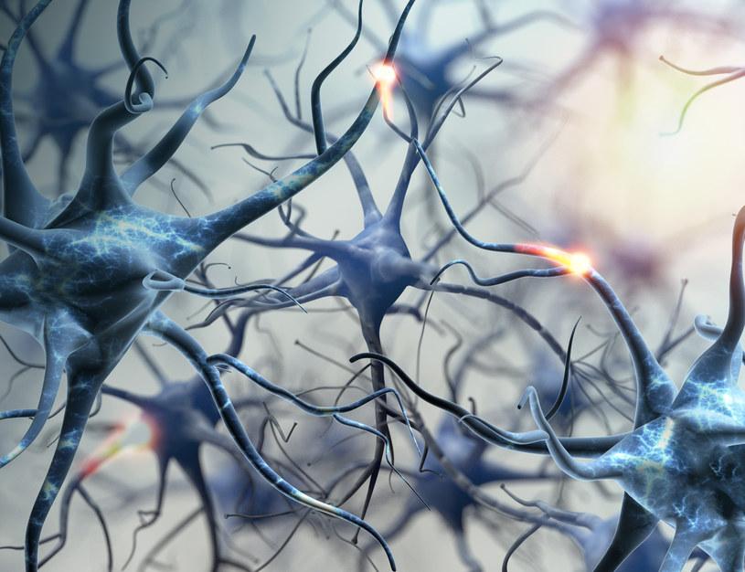 Przypadki tajemniczej choroby mózgu stwierdzono tylko w jednym regionie Kanady /123RF/PICSEL