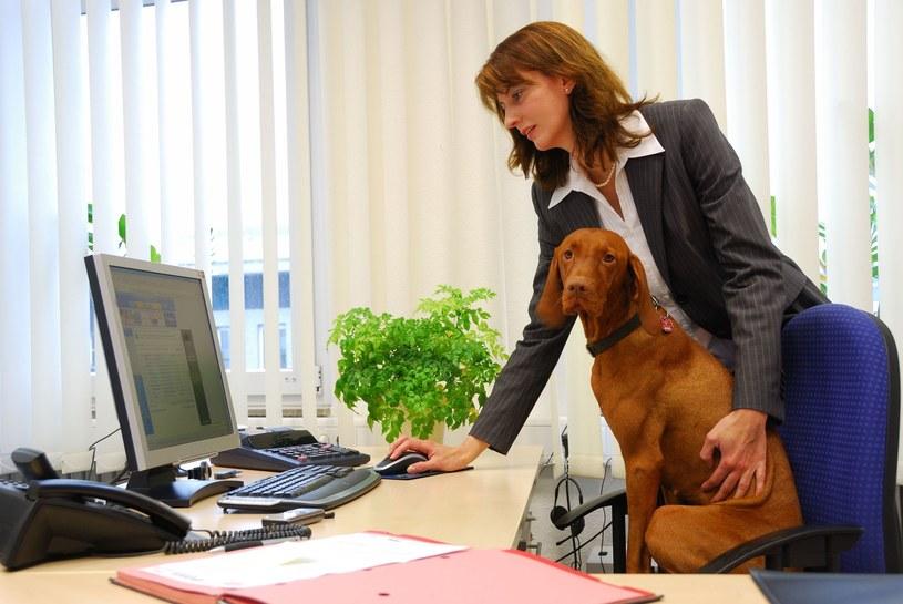 Przyprowadzaj psa do pracy. Firmy widzą w tym korzyści /123RF/PICSEL