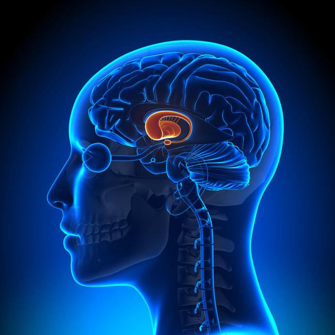 Przysadka mózgowa /©123RF/PICSEL