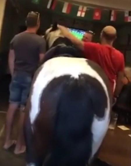 Przyszedł do pubu z... koniem