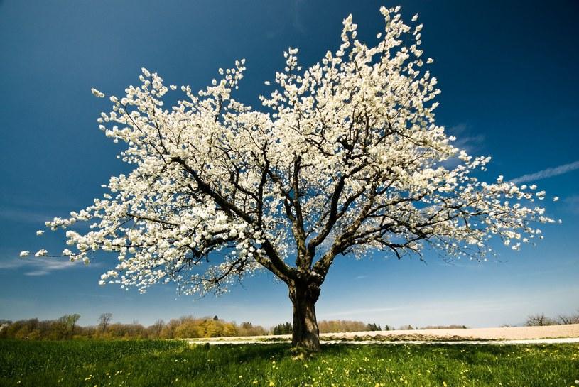 Przyszły tydzień zapowiada się bardzo wiosennie /123RF/PICSEL
