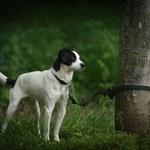 Przywiązał psa do drzewa i związał mu łapy taśmą. Trwają poszukiwania sprawcy