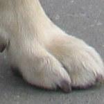 Przywiązał psa do grzejnika, bo pogryzł mu buty